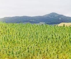 Hemp_Mountain