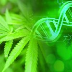 Cannabis DNA