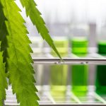 There are no AOAC Validated Cannabis Methods for Microbial Testing